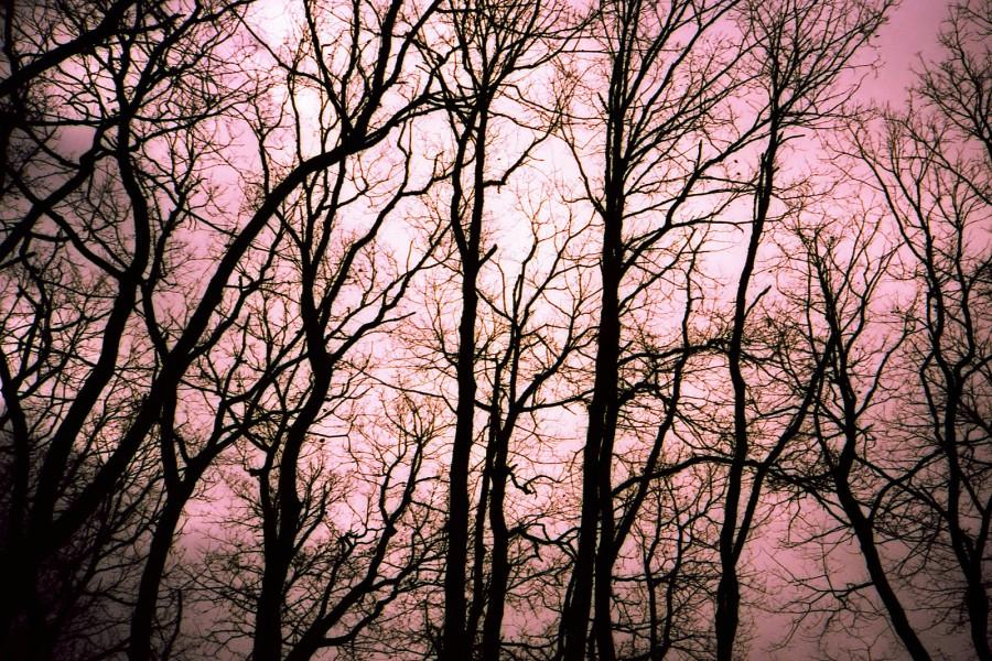 TreesN-900x600.jpg
